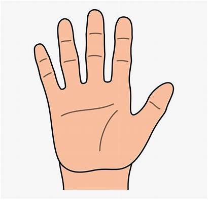 Clipart Fingers Finger Single Hand Clip Hands