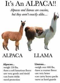 alpaca thread IGN Boards
