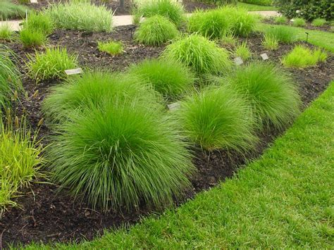 grasses for landscaping types of ornamental grasses diy garden projects vegetable gardening raised beds growing