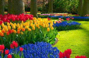 Image result for images flower garden with many different colors
