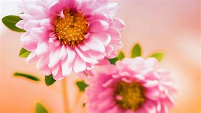 Pink Floral Wallpapers 1280 1080 1920 Resolutions