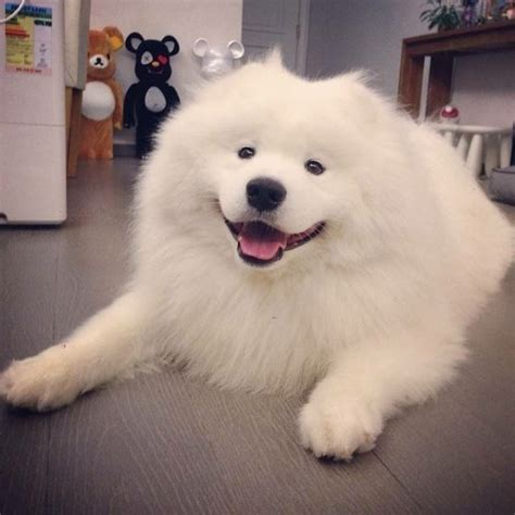 Discussion What Is The Cutest Dog Breed The Lounge Atrl