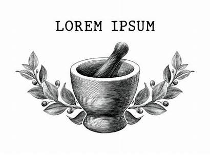 Pestle Mortar Vector Pharmacy Herbs Fashioned Engraving
