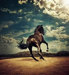 animal, beautiful, cool, horse, pretty - image #31068 on ...