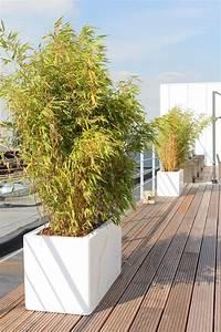 Acheter Des Plantes : acheter ou louer des plantes de terasse ~ Melissatoandfro.com Idées de Décoration
