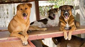 Dogs For Adopti... Dogs For Adoption