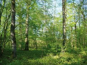 Avenir Et Bois : batijournal colloque changement climatique et fili re for t bois investir pour l 39 avenir ~ Voncanada.com Idées de Décoration