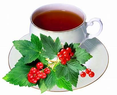 Tea Cup Harbal Transparent Herbal Flower