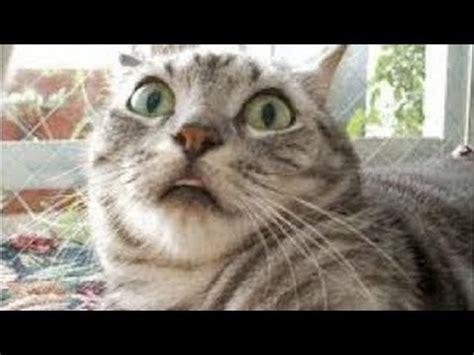 lustige katzen compilation  neue hd youtube