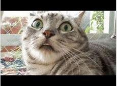 Lustige Katzen Compilation 2014 [Neue HD] YouTube