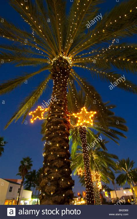 decorating palm tree christmas lights