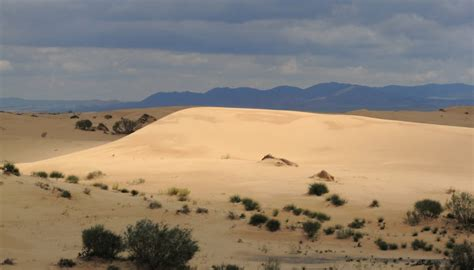 What Is the Average Yearly Rainfall in the Sahara Desert ...