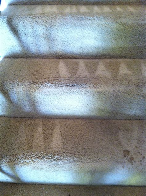 Carpet Cleaning Mountain View Ca   Carpet Cleaning   Carpet Cleaning Mountain View   650 239 6030