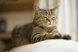 lifespan of cat cats live longer than dogs and it s because they re so