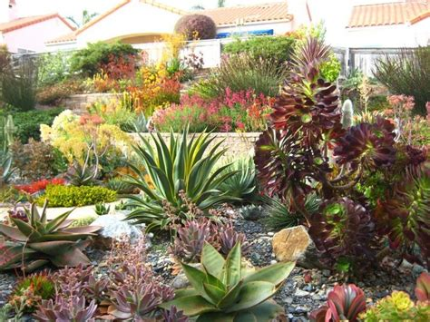 best 25 succulent landscaping ideas on