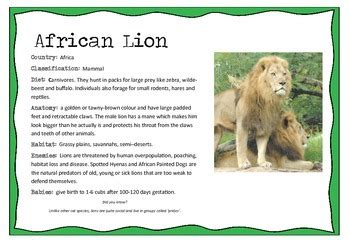 african animals information posters   willow tree tpt