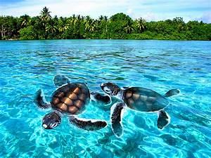 adorable, amazing, animals, beach, blue - image #221661 on ...