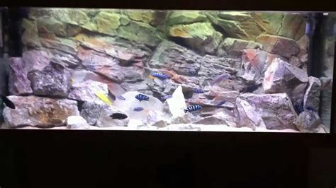 aquarium  rock background hd youtube