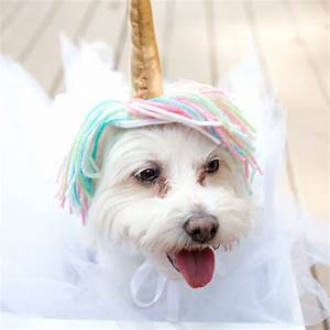 Unicorn Costume For Dogs Craft Box Girls Dog Beds and Costumes