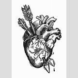 Anatomical Heart Tattoo Black And White | 600 x 863 jpeg 92kB