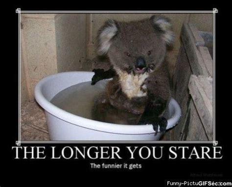 Animal Meme Generator - funny animal memes funny pictures 119 motivational pictures meme lol memes funny animal