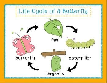 butterfly life cycle for preschool pre k kindergarten cycle of a butterfly ones room 818