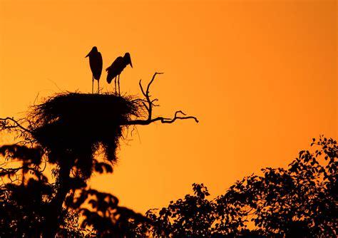 viagem   pantanal turismo matuete