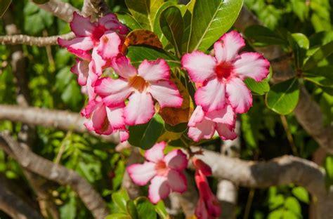caribbean plants flowers ers flow