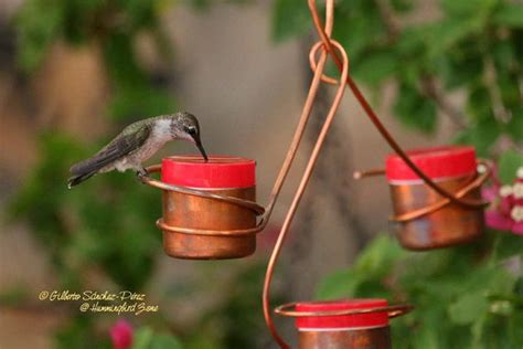 three station bee and wasp proof copper hummingbird feeder