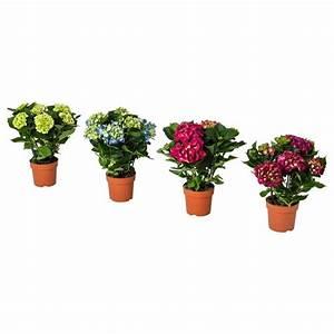 Pflanzen Bei Ikea : pflanzen orchideen g nstig online kaufen ikea ~ Watch28wear.com Haus und Dekorationen