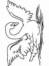 Coloring Pages Swan Birds Swans Printable sketch template