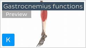 Functions Of The Gastrocnemius Muscle  Preview