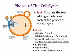 Complete Ocr Biology Module 2 1 6 Cell Division  Diversity