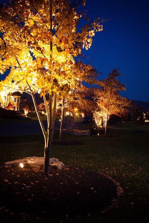 outdoor lighting for trees low voltage low voltage outdoor lighting how to install low voltage