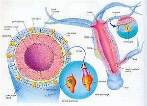 Anatomy of Animals