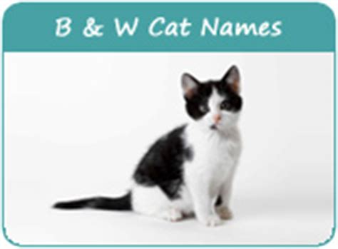white cat names cute black and white kitten names pictures to pin on pinterest pinsdaddy