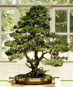 Chinesischer Wacholder Bonsai : bonsaiausstellung im botanischen garten m nchen ~ Sanjose-hotels-ca.com Haus und Dekorationen