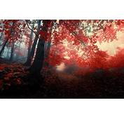 Wallpaper Autumn Forest Leaves Trees Nature Fog Red