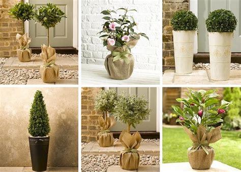 topiary trees in pots cox garden designs