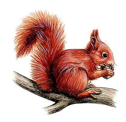 petit larousse de la cuisine encyclopédie larousse en ligne écureuil