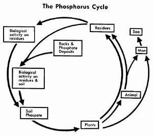 Phosphorus Cycle In Soil   www.pixshark.com - Images ...