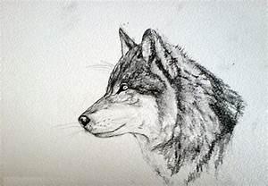 17+ Wolf Drawings - JPG, PSD, AI Illustrator Download