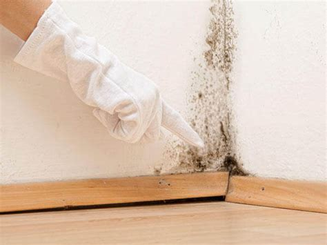 mold removal mold remediation montreal quebec renovert