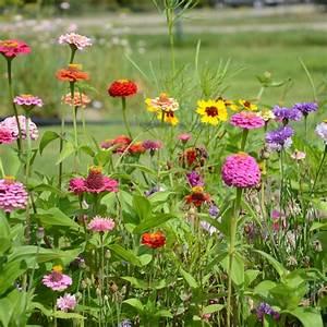 Graines Fleurs Des Champs : fleurs en m lange mellif res ernest turc ~ Melissatoandfro.com Idées de Décoration