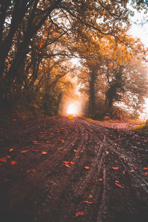 road between yellow leaf trees at daytime photo – Free ...