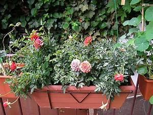 Rosen Für Balkon : meine rosen ~ Michelbontemps.com Haus und Dekorationen
