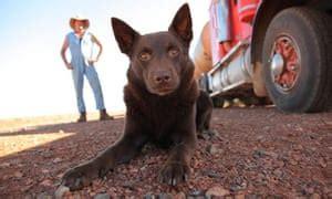 red dog  audience  australias  friend film