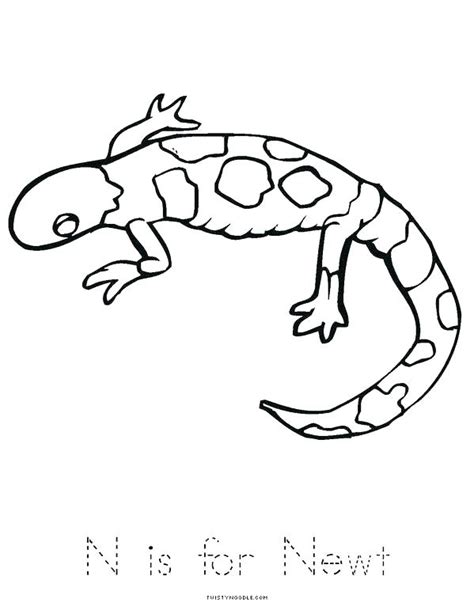 newt coloring page newt coloring page newt coloring page