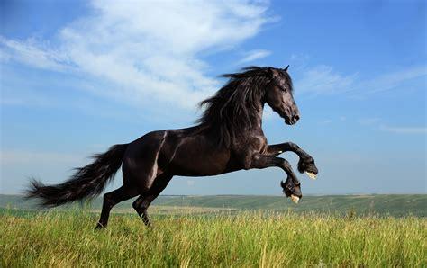 horse pet equine