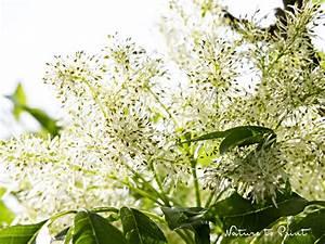 Kleine Bäume Für Den Garten : kleine hausb ume f r den kleinen garten am sonnenhang ~ Markanthonyermac.com Haus und Dekorationen
